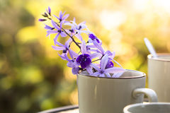 Purple vine flowers Stock Photography
