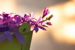 Purple vine flowers Stock Photos