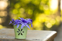 Purple vine flowers Royalty Free Stock Photo