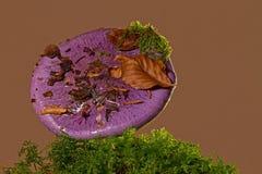 Purple, Violet, Flower, Plant Royalty Free Stock Photo