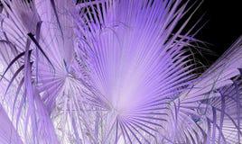 Purple, Violet, Lilac, Close Up stock image