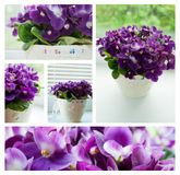 Purple violets collage. Five photos of purple violet flowers Royalty Free Stock Photos