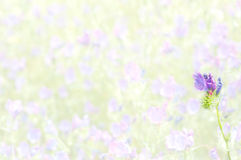 Purple Viper's Bugloss on the blurred background Royalty Free Stock Photo