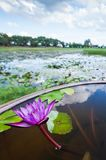 The purple water lily is in bloom on the basin nearby a tropical lake, a lake blurred backgrounds. The purple water lily is in bloom on the basin nearby a royalty free stock photo