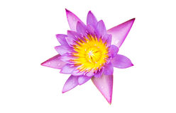 Purple water lily flower lotus isolate. On white background with clipping path Royalty Free Stock Photos