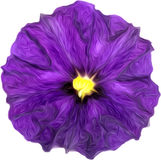Purple watercolor painting of purple flower Royalty Free Stock Photo