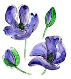 Purple watercolor poppy. Wildflower poppy flower in a watercolor style isolated. Full name of the plant: poppy, papaver, opium. Aquarelle wild flower for Stock Photography
