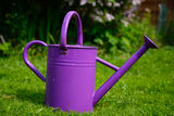 Purple watering can Stock Photography