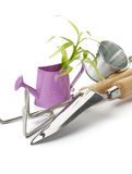 Purple Watering Can with Green Plant Stock Photos