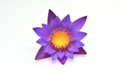 Purple waterlily Stock Image