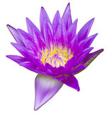 Purple waterlily isolated Royalty Free Stock Photo
