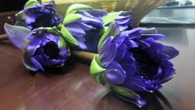 Purple waterlily Stock Photo