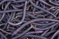 Purple Wax Snap Beans. Background Royalty Free Stock Photos