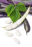 Purple Wax Snap Beans Stock Photo