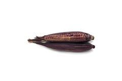 Purple waxy corn on white background Royalty Free Stock Image