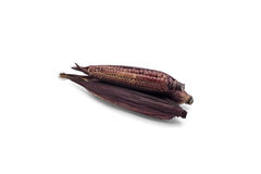 Purple waxy corn on white background Royalty Free Stock Images