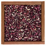Purple and white Anasazi beans in a wooden box royalty free stock photos