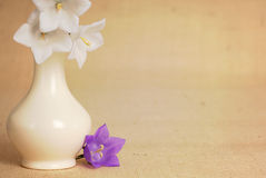 Purple and White Bellflowers with Vase on Burlap Stock Photo