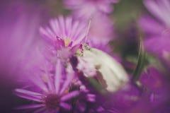 Purple white Stock Photos