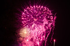 Purple and white fireworks Stock Image