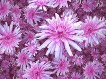 Purple White Flowers background Stock Photo