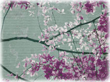 Purple and white flowers blossom Royalty Free Stock Images