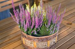 Purple and white heather flower in the basket on wooden table. Vintage, retro stock photography