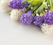 Purple and white Hyacinths Stock Images