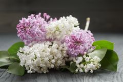 Purple and white lilac flower on old oak table Stock Photography