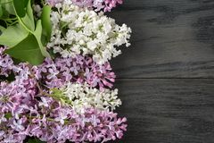 Purple and white lilac flower on old oak table top Stock Images
