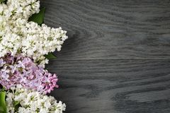 Purple and white lilac flower on old oak table top Royalty Free Stock Images