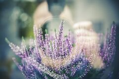 Purple and White Long Flower Blooms during Daytime Stock Photos