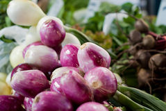 Purple and White Onions Stock Image