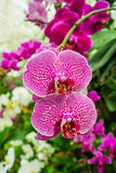 Purple and white orchid. Close-up of a purple and white orchid Stock Photos