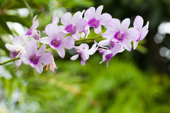 Purple white orchid closeup Stock Photo