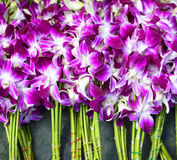 Purple and white orchid flowers Stock Photo