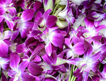 Purple and white orchid flowers Stock Images