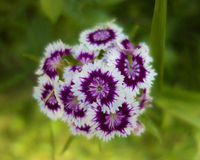 Purple and White Painterly Flowers stock image