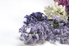 Purple, white and pink hyacinth on white backgrounds. Flowers of hyacinth on white background. Big group of flowers stock photos