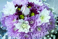 Purple and white posy bouquet of chrysanthemum flowers surrounding a single white rose Royalty Free Stock Photos