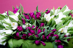 Purple and white tulips on black chair Stock Images