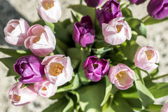 Purple and white tulips bucket easter decoration flowers brown background Stock Photos