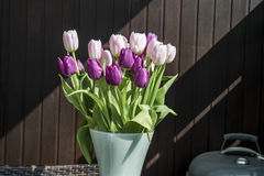 Purple and white tulips bucket easter decoration flowers brown background Royalty Free Stock Photos