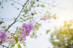 Purple wild flower on branch against blue sky stock images