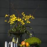 Purple, white, yellow falan orchid, Royalty Free Stock Photo