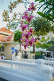 Purple, white and yellow orchids in King Mongut University Stock Photography