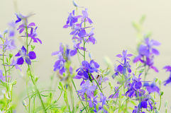 Purple wild flowers Stock Photo