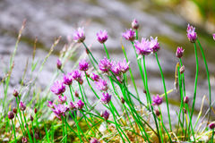 Purple wild flowers. In forest Stock Photos