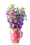 Purple wild flowers Stock Images