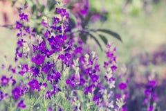 Purple wild flowers Stock Photo